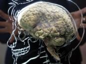 ¿Sabías que tu cerebro puede manejar macrodatos?