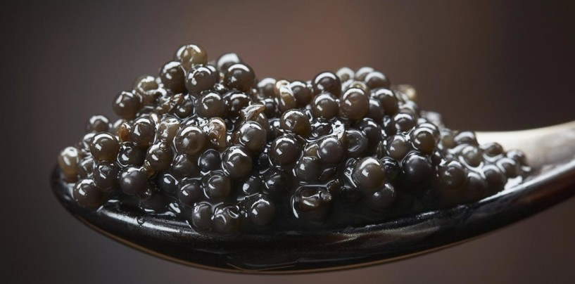 ¿Qué hace al caviar ser el 'oro negro de Italia' y el alimento indicador de la alta alcurnia?
