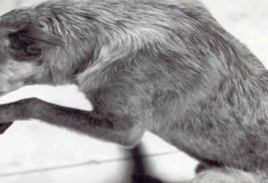 ¿Existe una  Sociedad Protectora de Animales en R.D.?