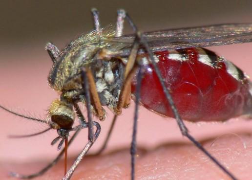 El virus del Zika: entérese de sus causas y que otros virus nos amenazan